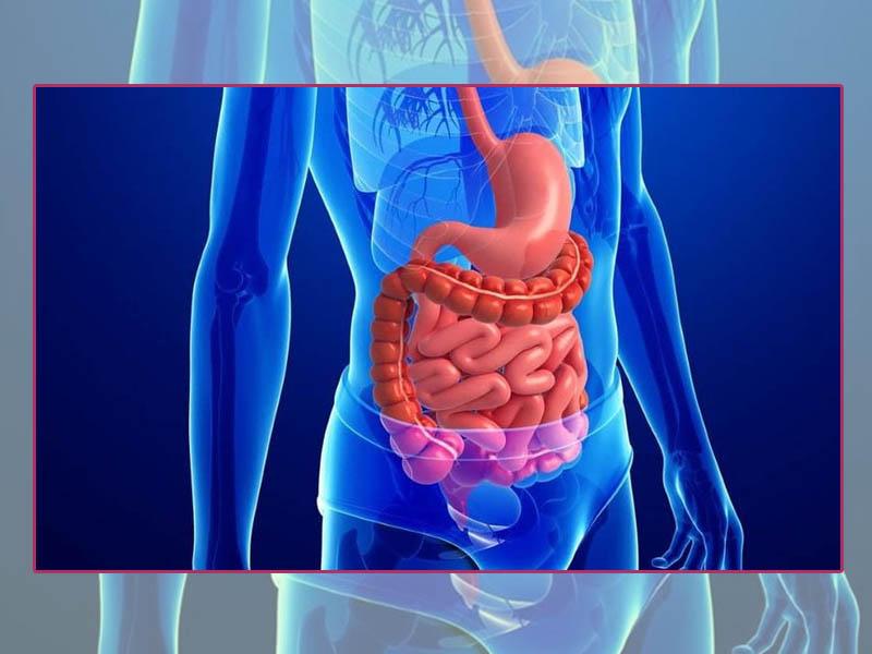 Men vi sinh hỗ trợ chức năng của đường tiêu hóa